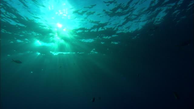 sea, sun radiates, bahamas  - gruppo medio di animali video stock e b–roll