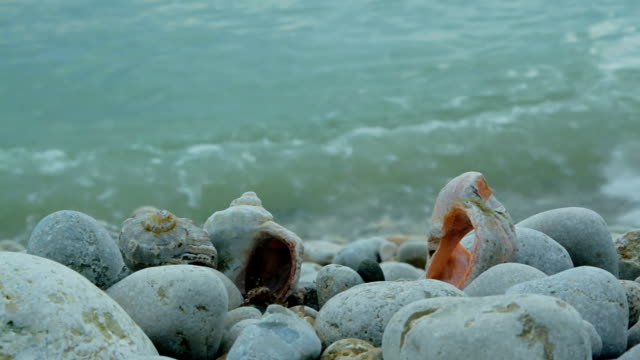 sea surf on the background of rocks and seashells - seashell stock videos & royalty-free footage