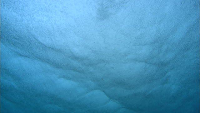 stockvideo's en b-roll-footage met sea surface, rain, from below, aldabra, indian ocean  - onder