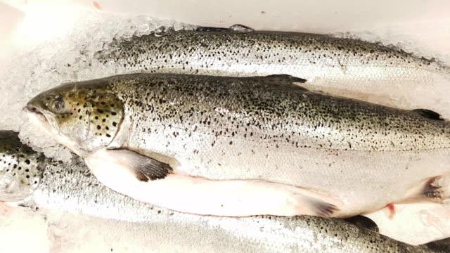 meerforellen an fisch markt display - auslage stock-videos und b-roll-filmmaterial