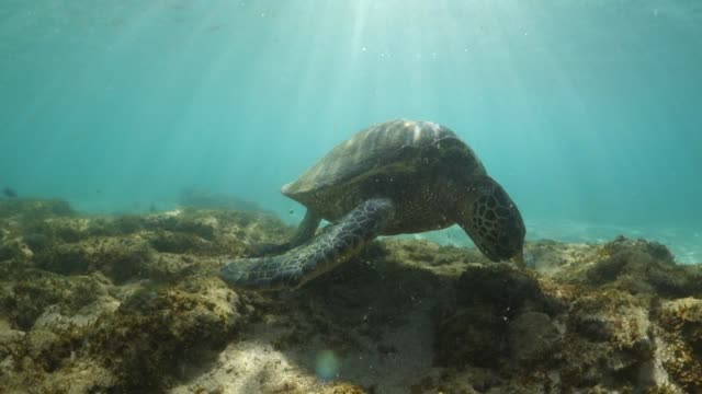 sea turtle and the sun - sea turtle stock videos & royalty-free footage