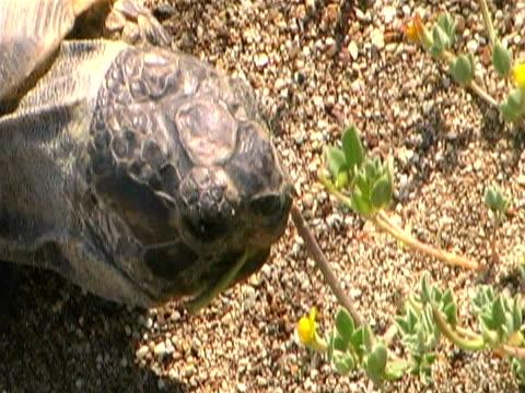 Sea Turtle Eating on Beach
