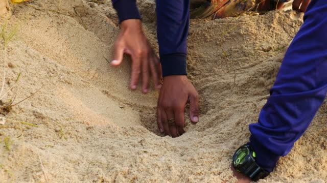 meeresschildkröte eier mit neugeborenes tier im sand - nest stock-videos und b-roll-filmmaterial