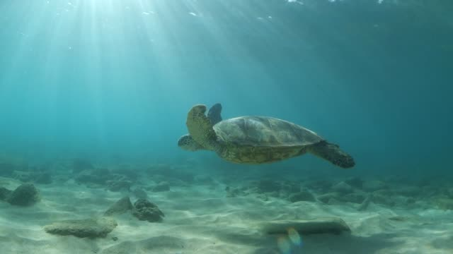a sea turtle glides over the ocean floor under the sun - sea turtle stock videos & royalty-free footage