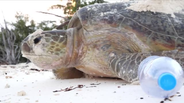 sea turtle on a beach with plastic pollution - bottiglia video stock e b–roll