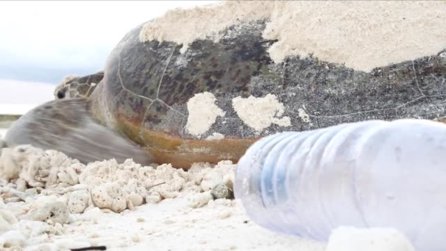 sea turtle on a beach with plastic pollution - chelonioidea stock-videos und b-roll-filmmaterial
