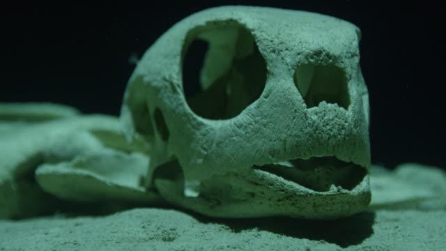 sea turtle skull - 動物の骨点の映像素材/bロール