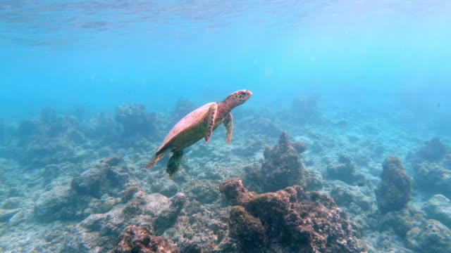 sea turtle swimming in the sea - reef stock videos & royalty-free footage