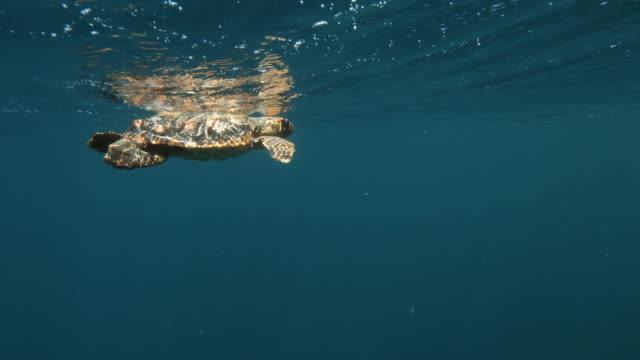 sea turtle swimming underwater during day - azores, portugal - loggerhead sea turtle stock videos & royalty-free footage