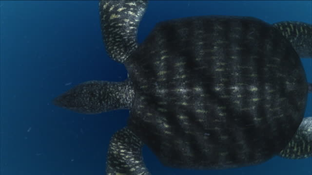 a sea turtle swims through plankton in a computer-generated animation. - tartaruga video stock e b–roll