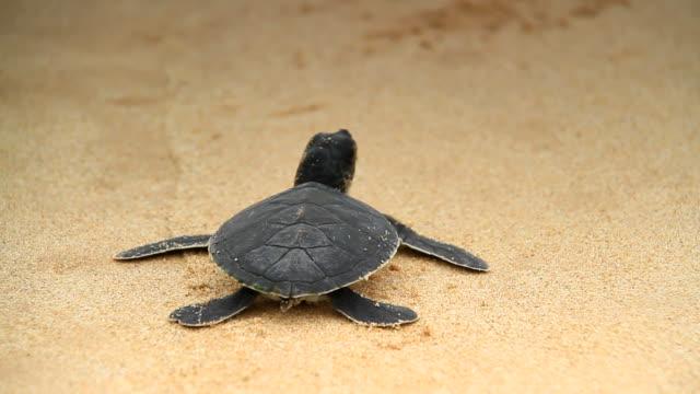 vídeos y material grabado en eventos de stock de tortuga de mar - sri lanka