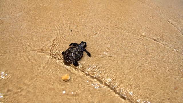 vidéos et rushes de tortue de mer - tortue aquatique