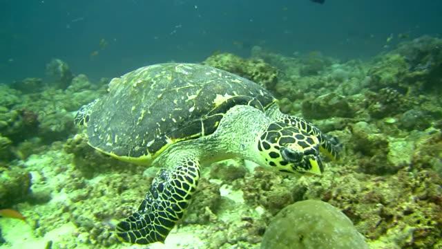 cu sea turtle - freshwater stock videos & royalty-free footage