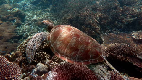 meeresschildkröte  - landschildkröte stock-videos und b-roll-filmmaterial