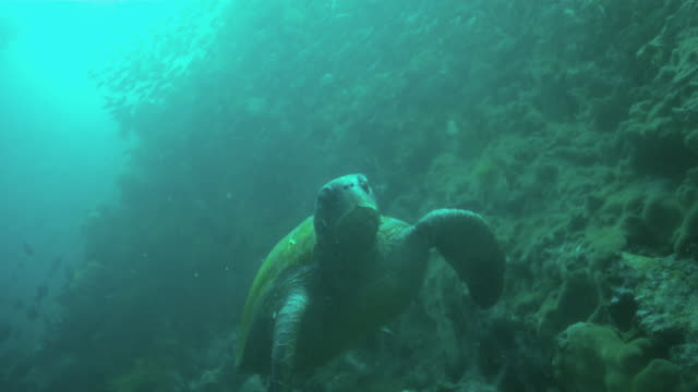 sea turtle - green turtle stock videos & royalty-free footage