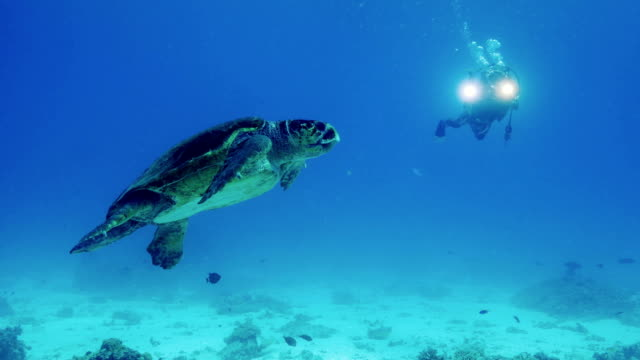 sea turtle - scuba diving stock videos & royalty-free footage