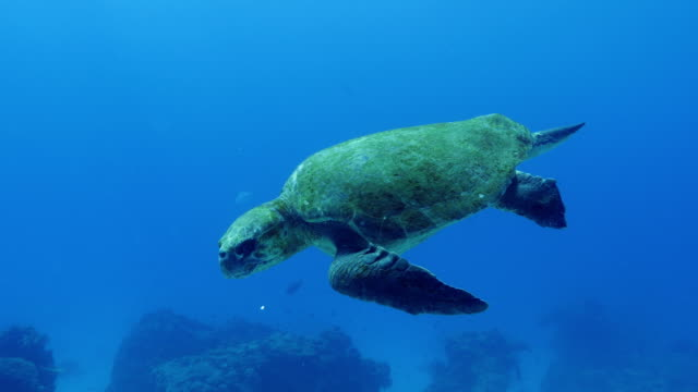 sea turtle with divers - aqualung diving equipment stock videos & royalty-free footage