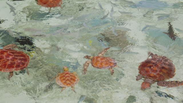 sea turtles and fish swimming - 水棲ガメ点の映像素材/bロール