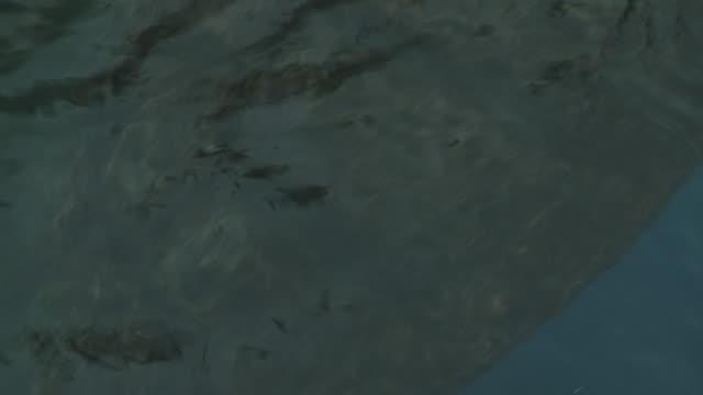 Sea turtles in captivity swim near the edge of a pool.