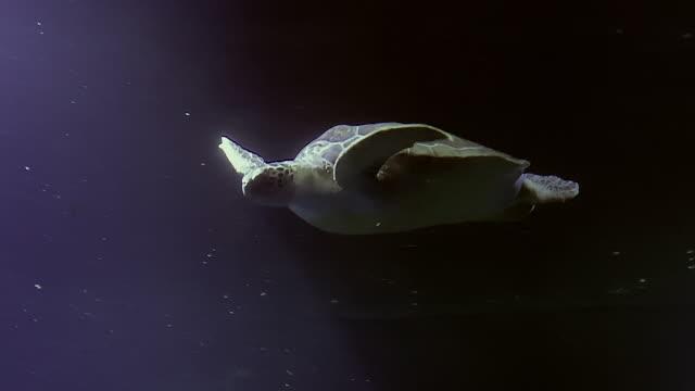 sea turtles swimming in the ocean - turtle stock videos & royalty-free footage