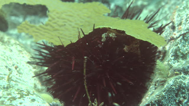 sea urchin under the sea - ricci di mare video stock e b–roll