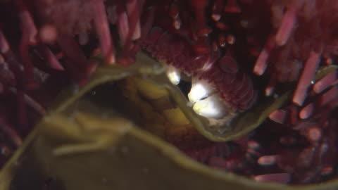 sea urchin under the sea - ウニ点の映像素材/bロール