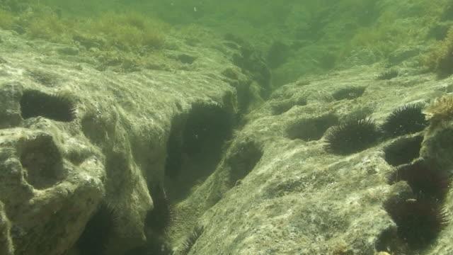 vídeos de stock e filmes b-roll de urchins no mar mediterrâneo - invertebrado