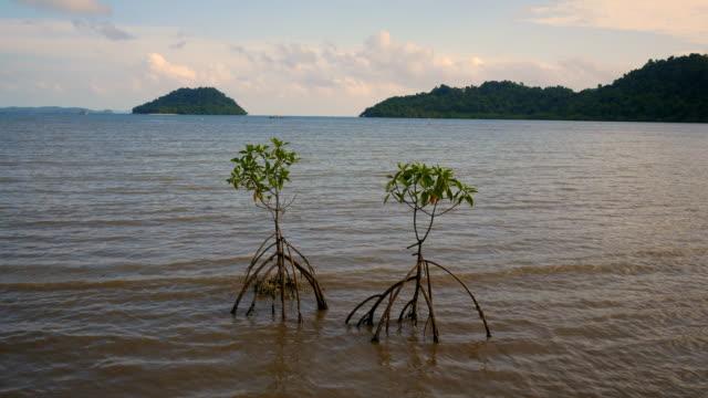 sea view small mangrove tree - mangrove tree stock videos & royalty-free footage