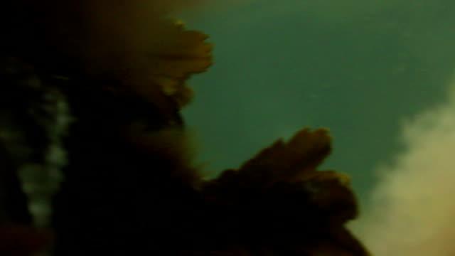 meer weed - seegras material stock-videos und b-roll-filmmaterial