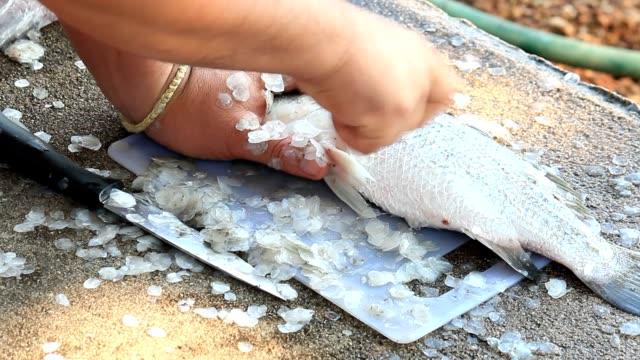 vídeos y material grabado en eventos de stock de cocina la lubina - pescado y mariscos