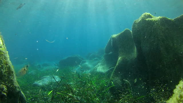 stockvideo's en b-roll-footage met seabed with sun rays light - oceaanbodem