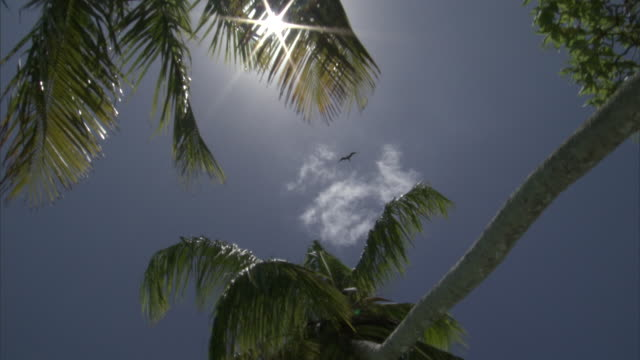 seabirds and coconut palms (cocos nucifera) against sun and sky, palmyra atoll, usa - palm tree stock videos & royalty-free footage