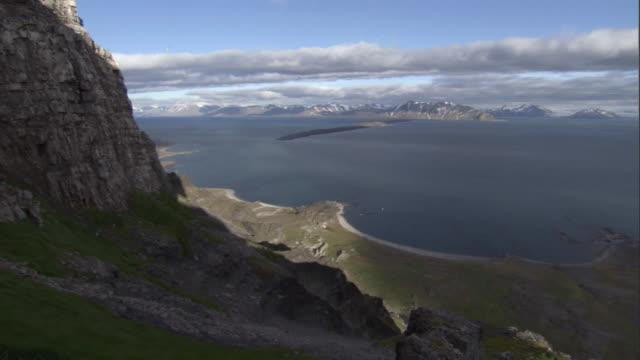 seabirds fly near a cliff face. - svalbard and jan mayen stock videos & royalty-free footage