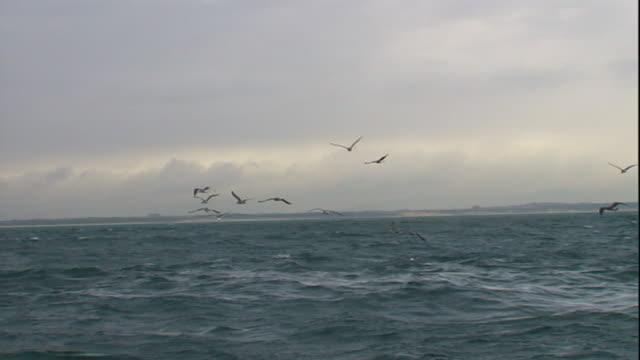 seabirds fly over a choppy sea. - sea water bird stock videos & royalty-free footage
