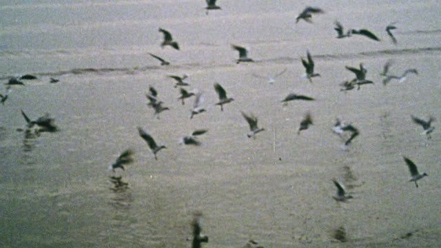 1969 ts seabirds flying over the shoreline in a bay / kent, england - 1969 stock videos & royalty-free footage