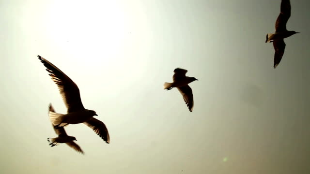 seabirds/seagulls - animals in the wild stock videos & royalty-free footage