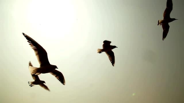 Seabirds/Seagulls