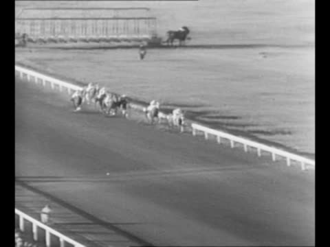 seabiscuit leads pack of horses in the stretch at horse race at pimlico race course / seabiscuit in the winner's circle after the race, with wreath;... - hooved animal stock videos & royalty-free footage