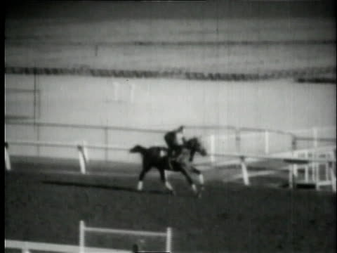 stockvideo's en b-roll-footage met seabiscuit running during training / united states - shaky