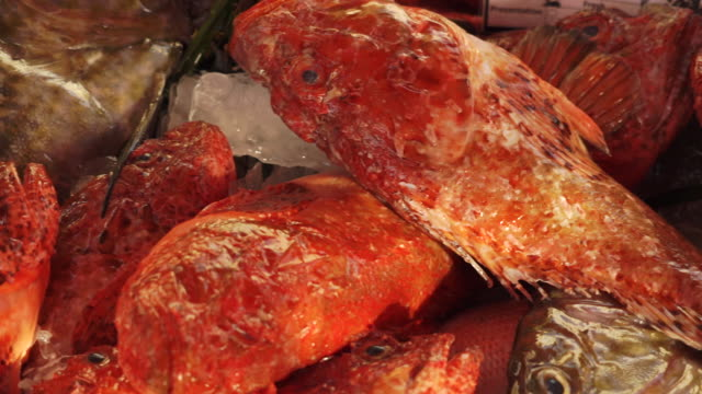 seafood at fish market in malta - fang stock-videos und b-roll-filmmaterial