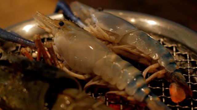 seafood set - mollusk stock videos & royalty-free footage