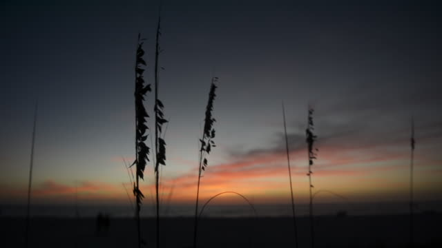 CU Seagrass at sunset