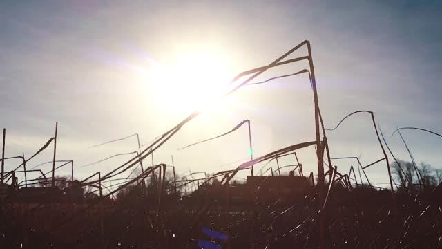 Seagrass-Blasen im Wind in Slow Motion