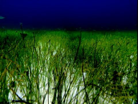 seagrass covers a seabed. - history点の映像素材/bロール