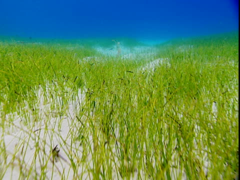 seagrass grows on the sandy seabed of the bahamas. - history点の映像素材/bロール