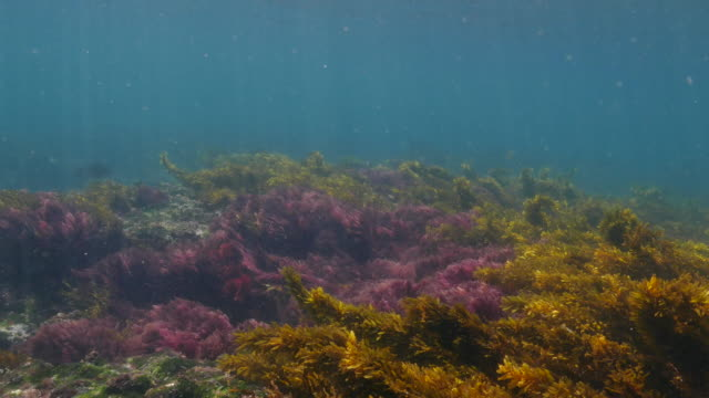 seagrass, moss, undersea reef, galapagos - sea grass plant video stock e b–roll