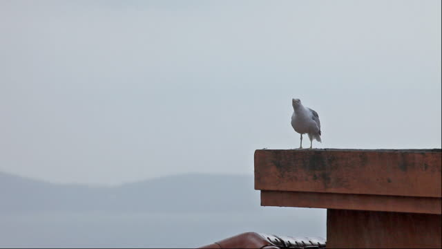 seagull and rain - seagull stock videos & royalty-free footage