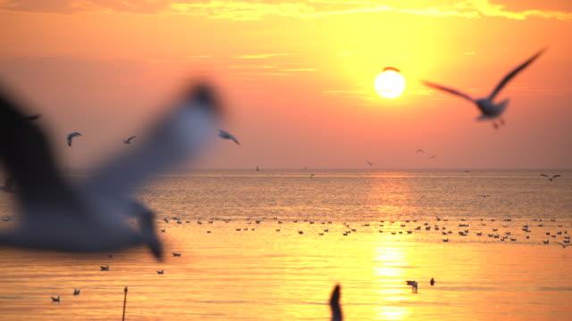 gabbiano e tramonto - stormo di uccelli video stock e b–roll