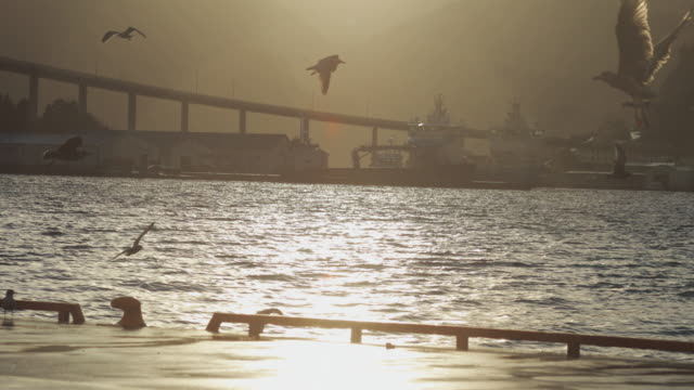 seagull birds: the fjord at sunset - flock of birds stock videos & royalty-free footage