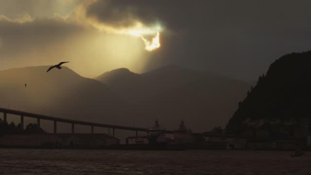vidéos et rushes de oiseaux de mouette: le fjord au coucher du soleil - grand groupe d'animaux